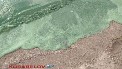 "зеленая вода на пляже ""Чайка"" 02.06.2020"