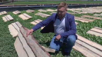 Photo of В Галицыново работает единственная в регионе улиточная ферма (видео)