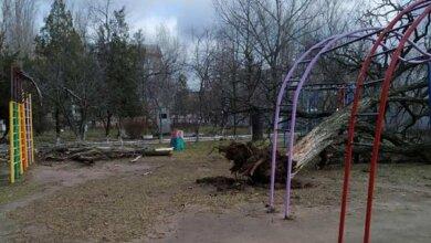 Photo of «Займитесь наконец работой!»: больше года в Корабельном не могут организовать снос аварийных деревьев в детсаду