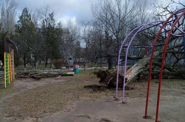 """""""Займитесь наконец работой!"""": больше года в Корабельном не могут организовать снос аварийных деревьев в детсаду   Корабелов.ИНФО"""