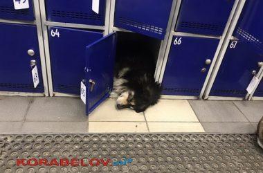 """собаки в """"АТБ"""" в Корабельном районе (начало 2020 года)"""