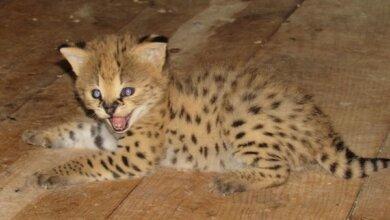 Photo of Летний baby-boom: в Николаевском зоопарке сразу у нескольких видов животных появились детеныши