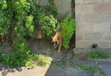 Photo of Бродячие собаки в Корабельном районе бросаются на людей