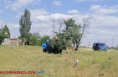 спил деревьев по ул. Ольжича