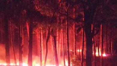 Photo of Предполагаемая причина – поджог: в Балабановском лесу выгорело 1500 кв. м хвойной подстилки