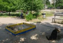 Photo of Собаки в Николаеве разрывают котов, а трупы закапывают в детской песочнице
