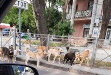 Photo of В Николаеве до конца года потратят почти 2 млн на отлов и стерилизацию бездомных котов и собак