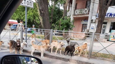 бродячие собаки в Корабельном районе (август 2020)