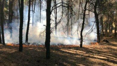 Photo of В Николаеве дважды за день горел Балабановский лес