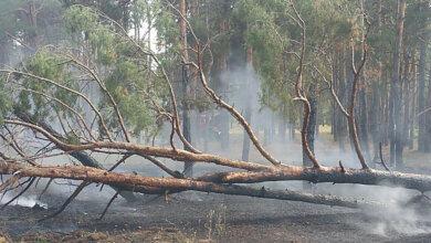 Photo of Поджог: спасатели из трех районов тушили пожар в Балабановском лесу