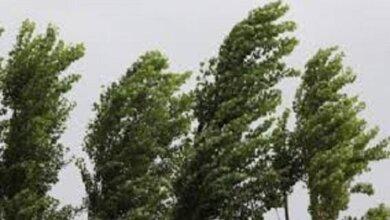 Вітер досягатиме штормових значень... Прогноз погоди для миколаївців на вихідні   Корабелов.ИНФО