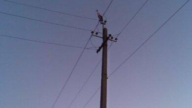 В Широкой балке на фонарных столбах заночевали аисты, летевшие в теплые края | Корабелов.ИНФО