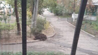 """Photo of """"Ни в одной канализации коронавирус не передавался"""": возле дома в Корабельном выложили кучи фекалий"""