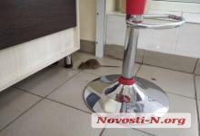 Photo of В кондитерском магазине Николаева покупатели обнаружили живую крысу. Видео