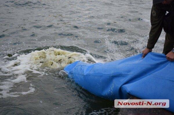 В реку Южный Буг в Николаеве выпустили 255 тысяч мальков толстолобика, карпа и белого амура (видео) | Корабелов.ИНФО