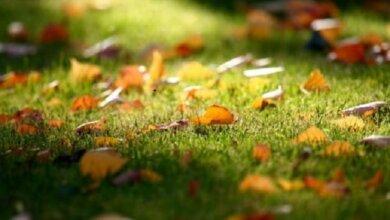 Начебто у вересні: прогноз погоди для миколаєвців на завтра | Корабелов.ИНФО