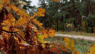 На 1-2˚ вище за кліматичну норму: прогноз погоди на Миколаївщині у листопаді | Корабелов.ИНФО