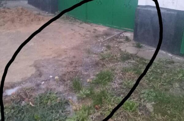 """""""Дикий народ"""": жители Корабельного района сливают канализацию прямо на улицу   Корабелов.ИНФО"""