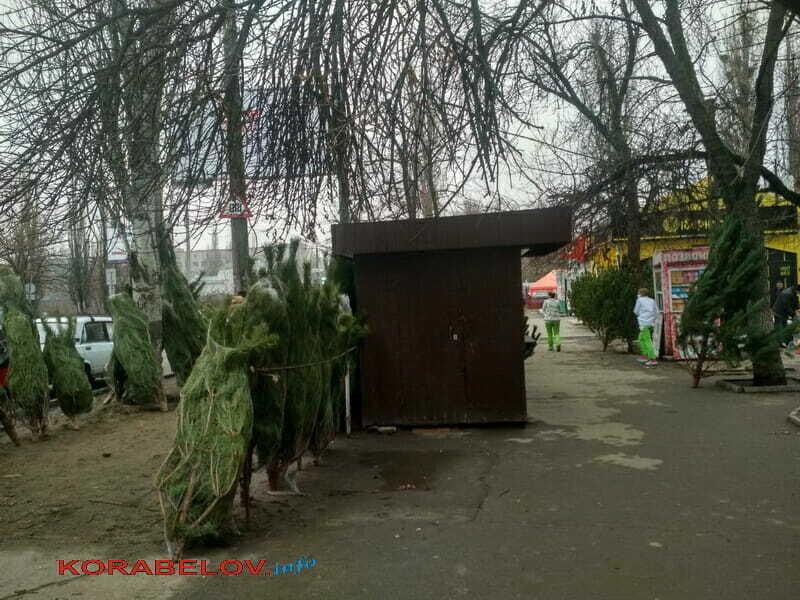 продажа сосен в Корабельном районе