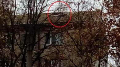 нет кусков кровли, крыша по пр. Богоявленскому, 295 (осень 2020)