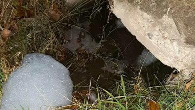 С заявлением на автомойку в Корабельном, сливающую химикаты в речку, обратились в полицию   Корабелов.ИНФО image 2