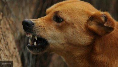 В Херсоне бродячая собака едва не откусила прохожему половые органы | Корабелов.ИНФО