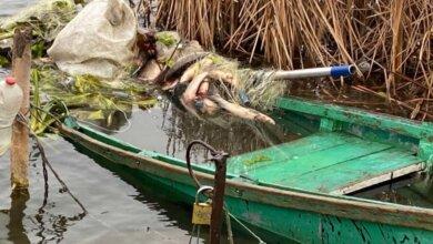 На реке Южный Буг двое рыбаков упали в воду: водолазы отправились на поиски | Корабелов.ИНФО