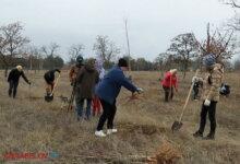 Photo of В парке Корабельного района высадили липы (видео)