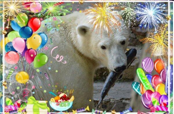 Николаевский зоопарк в период локдауна можно будет посетить онлайн   Корабелов.ИНФО