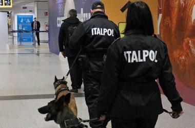 В аэропорту Рима собаки будут выявлять коронавирус по запаху   Корабелов.ИНФО