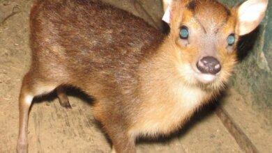 У Миколаївському зоопарку народилось оленятко | Корабелов.ИНФО