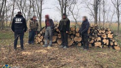 Николаевская СБУ занялась лесорубами | Корабелов.ИНФО image 2