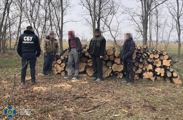 Николаевская СБУ занялась лесорубами   Корабелов.ИНФО image 2