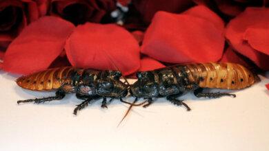 Отпусти несчастную любовь: в Николаевском зоопарке будут кормить животных тараканами с именами негодяев   Корабелов.ИНФО