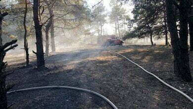 В Николаеве спасатели тушили Балабановский лес   Корабелов.ИНФО image 3