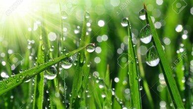 Прогноз погоды на завтра: к ночи дождь в Николаеве прекратится, а днём будет до +17 градусов | Корабелов.ИНФО