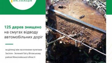 В Витовском районе спилили свыше ста деревьев — ущерб оценили почти в миллион | Корабелов.ИНФО