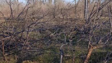 В Николаеве задержали мужчин, пиливших деревья в парке «Дружба» Корабельного района | Корабелов.ИНФО