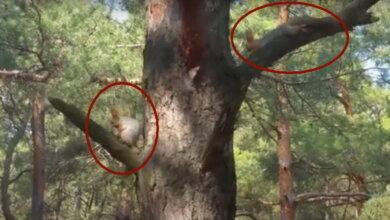 белки в Балабановском лесу