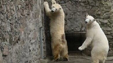 Николаевский зоопарк из-за усиления карантина закроет для посетителей ряд экспозиций   Корабелов.ИНФО