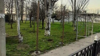 Строительство АТБ: в зеленой зоне возле автовокзала снова устанавливают забор (видео)   Корабелов.ИНФО
