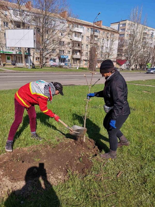 Попрацювали з лопатами: чиновники в Корабельному районі посадили дерева | Корабелов.ИНФО image 2