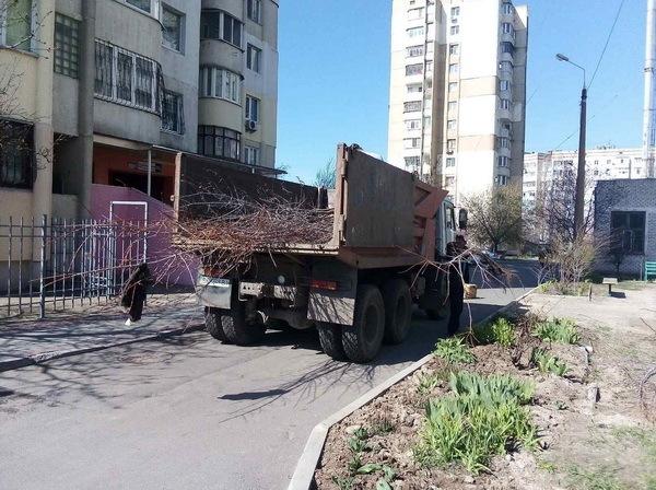 Попрацювали з лопатами: чиновники в Корабельному районі посадили дерева | Корабелов.ИНФО image 5