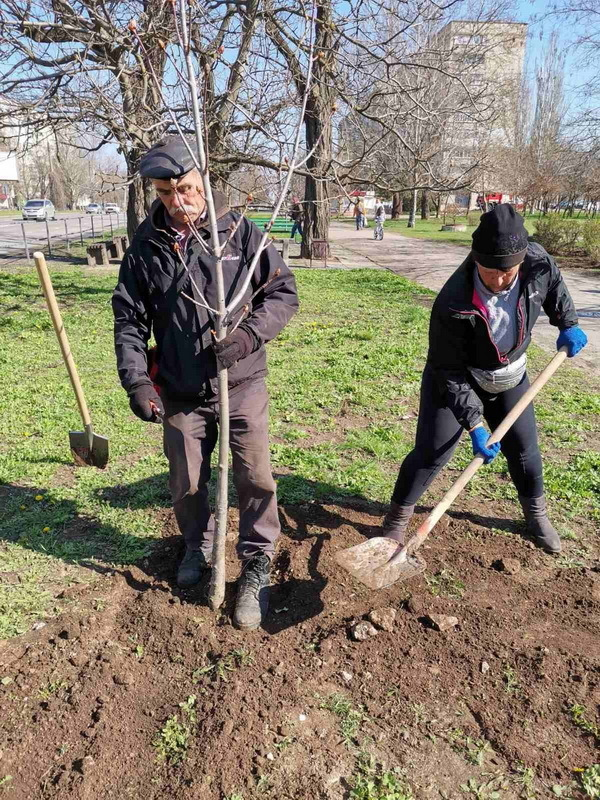 Попрацювали з лопатами: чиновники в Корабельному районі посадили дерева | Корабелов.ИНФО image 4