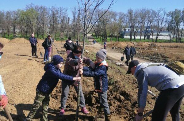 """посадка деревьев в парке """"Богоявленский"""""""