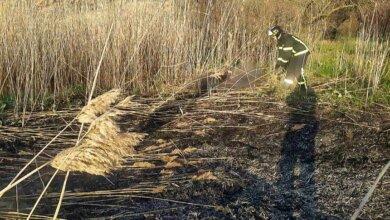 В Корабельном районе во время пожара сгорело 800 м² камыша | Корабелов.ИНФО