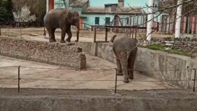 слоны в Николаевском зоопарке