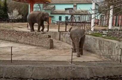 В Николаевском зоопарке показали трюки слонов. ВИДЕО   Корабелов.ИНФО