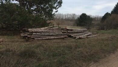 вырубка леса за НГЗ
