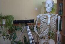 скелет в кабинете биологии гимназии №3